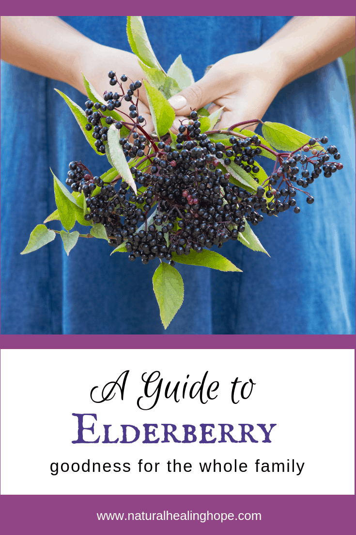A Guide to Elderberry Goodness for the Whole Family- Pinterest image