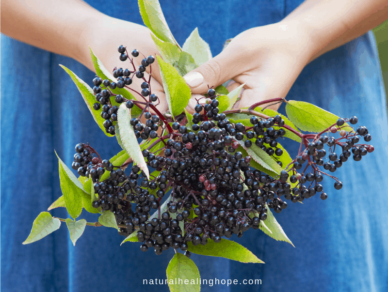 Lady holding elderberry branches