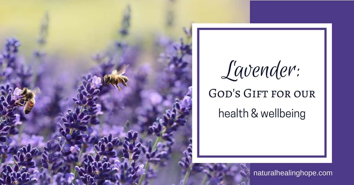 Lavender God S Gift For Our Health And Wellbeing