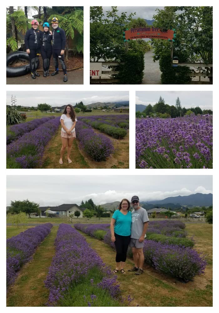 Our Patch Lavender in New Zealand