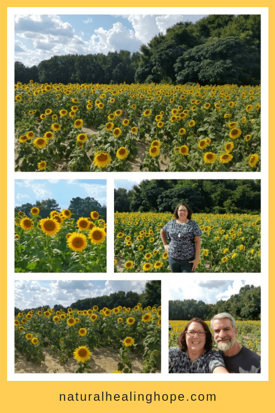 sunflower pictures collage